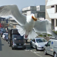 "I personally think that this is the best Google Street View capture ever, even much better than the ""<a href=""http://www.techxav.com/2010/01/04/street-view-prostitutes/"">Old Dude Caught Picking Up Prostitues</a>"". Well, is this beautiful white bird, which resembles the seagulls in Pixar's Finding Nemo, heading for KFC?